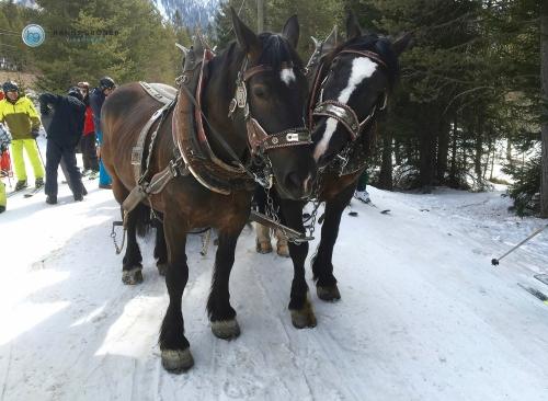 Pferde in Armentarola (Foto: Hanns Gröner)