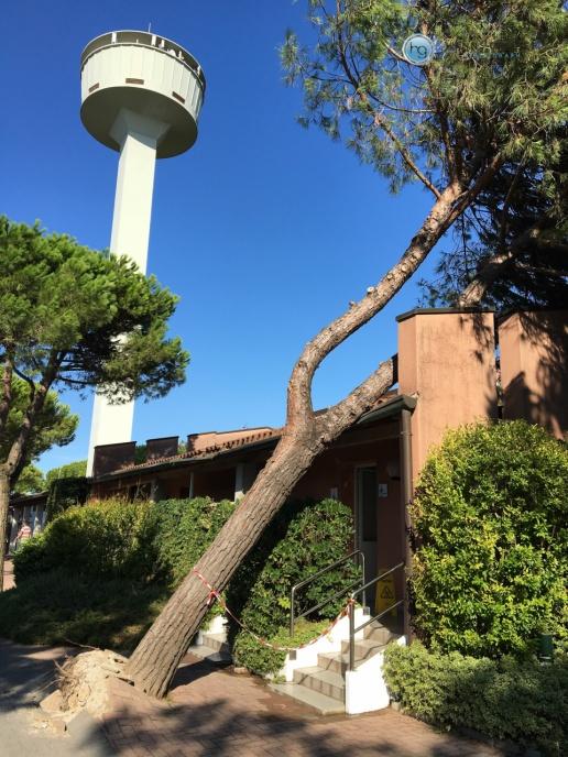 Tornado in Cavallino am 10. August 2017 - Entwurzelter Baum (Foto: Hanns Gröner)